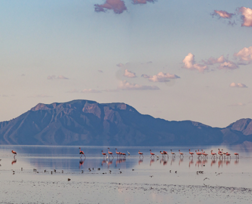 Lake Natron is home to millions of flamingos