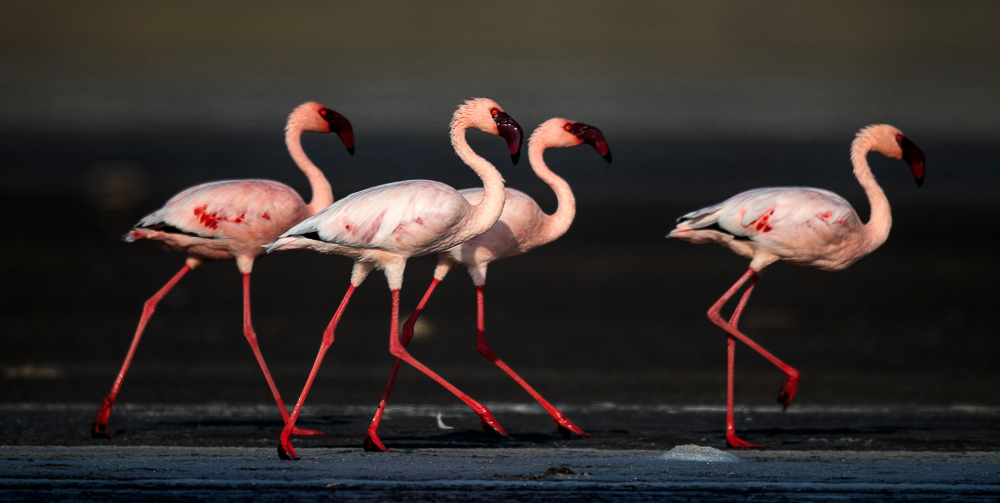Flamingos at Lake Natron
