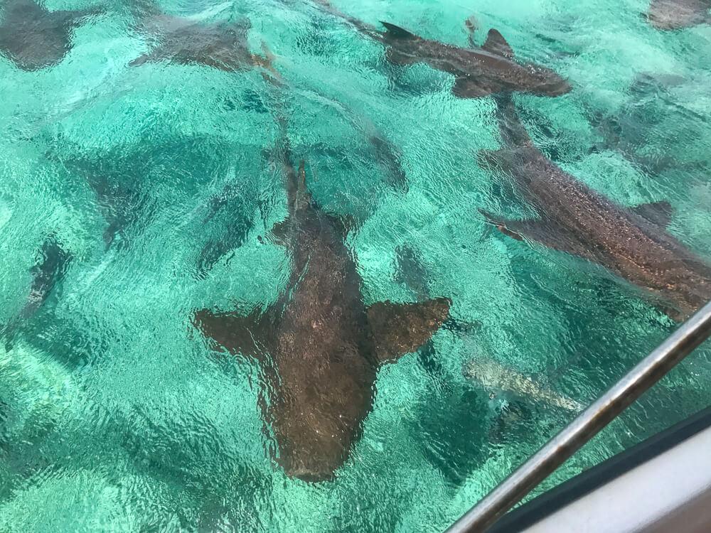 Caye Caulker Shark alley