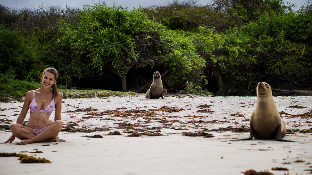 Galapagos islands: San Cristobal: sea lion at beach