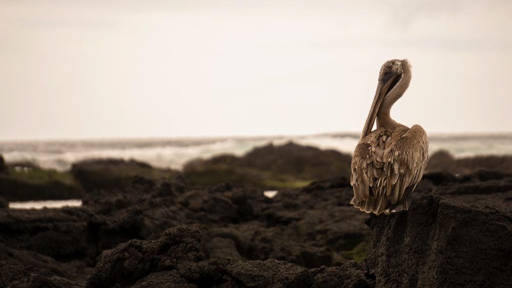 Galapagos Islands: isla Isabela - day trip to las tunneles