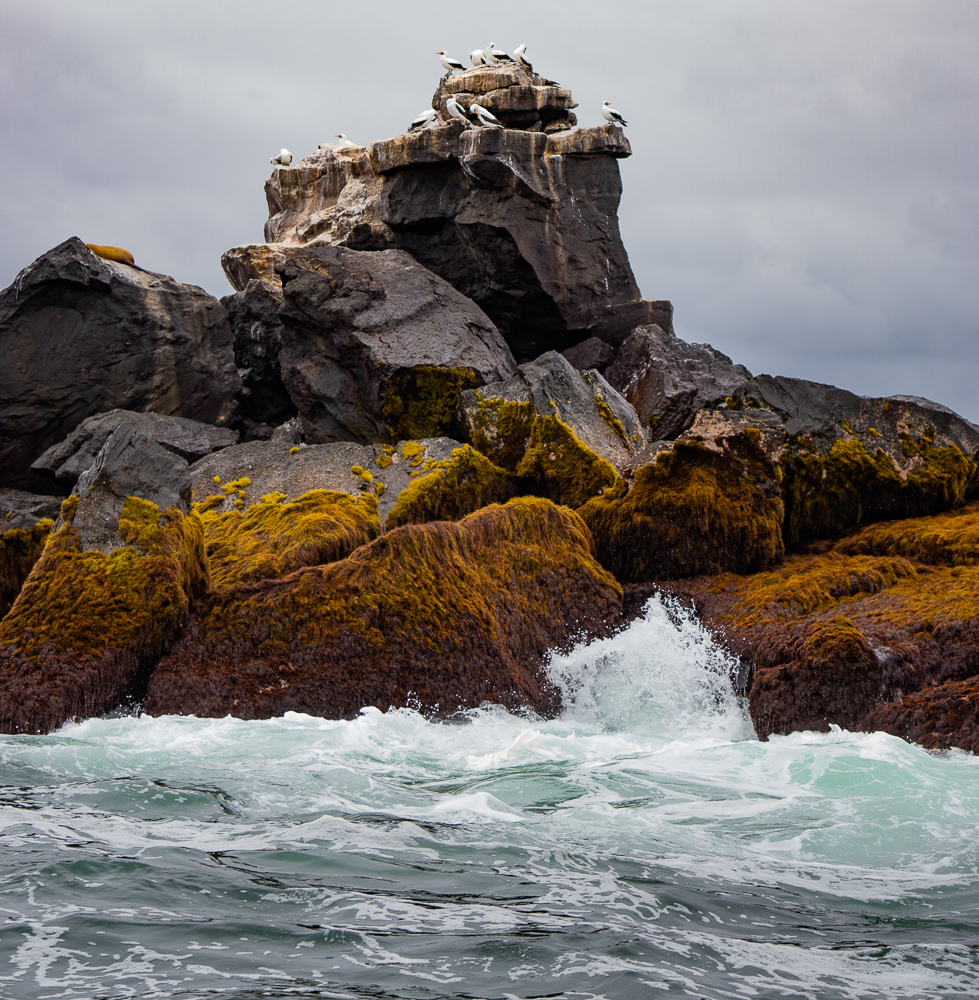 Galapagos islands, Isla Isabela: rock