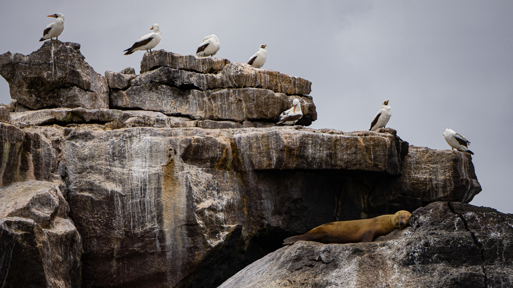 Galapagos islands, Isla Isabela: rock with sea lion