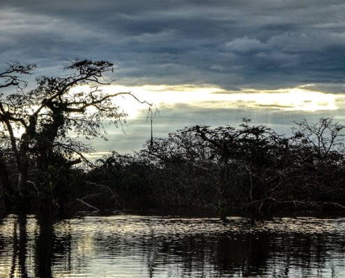 Cuyabeno: Ecuador's rainforest at sunset