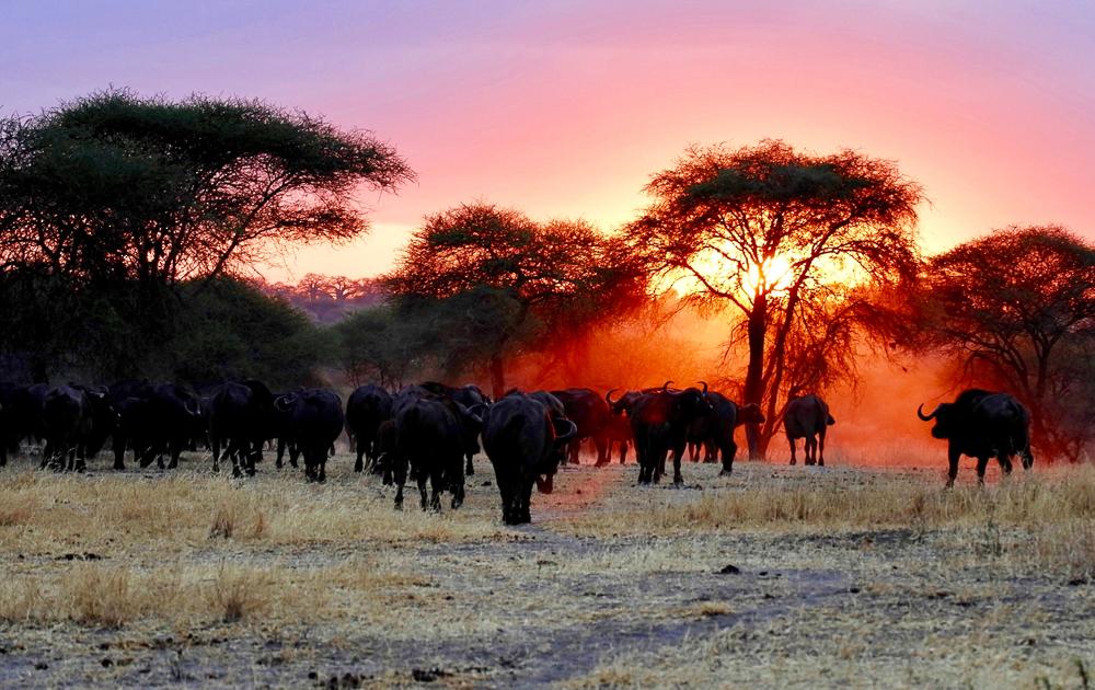 Trangire National Park - Elefanten im Sonnenuntergang