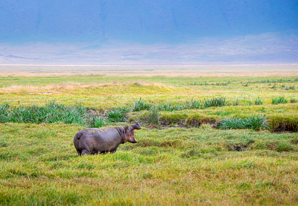 Ngorongoro safari: rhino incrater
