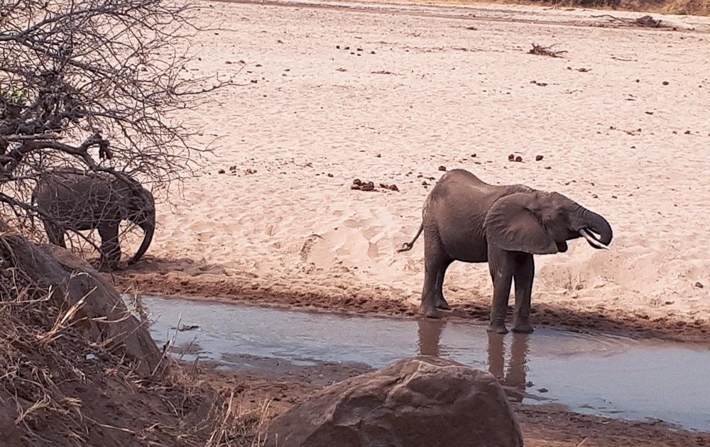 Elefanten im Tarangire Nationalpark